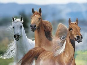 Dream Horses 026 by Bob Langrish