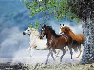 Dream Horses 034 by Bob Langrish