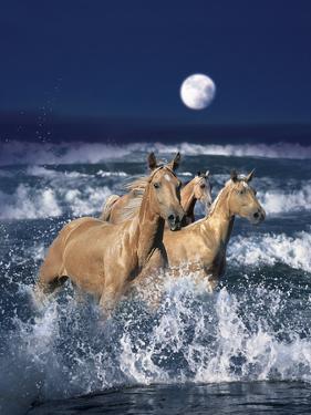 Dream Horses 036 by Bob Langrish