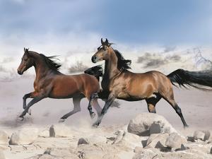 Dream Horses 039 by Bob Langrish