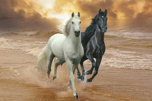 Dream Horses 046 by Bob Langrish