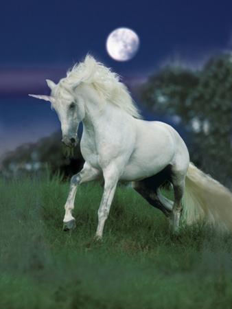 Dream Horses 047