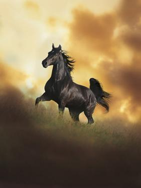 Dream Horses 049 by Bob Langrish