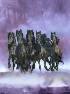 Dream Horses 057 by Bob Langrish