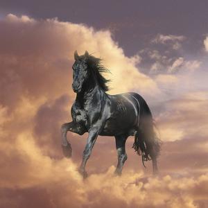 Dream Horses 058 by Bob Langrish