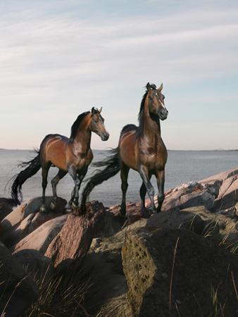 Dream Horses 059 by Bob Langrish