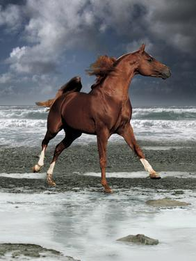 Dream Horses 062 by Bob Langrish