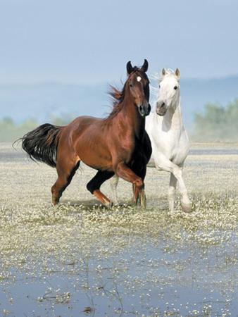 Dream Horses 067 by Bob Langrish