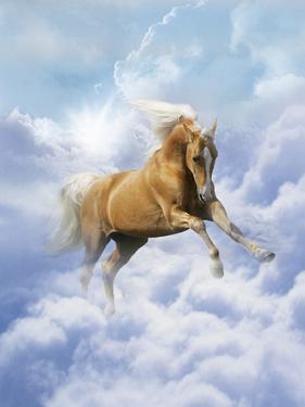 Dream Horses 069 by Bob Langrish