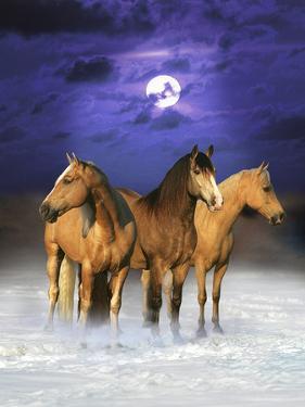 Dream Horses 077 by Bob Langrish