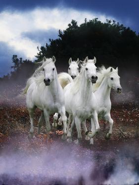 Dream Horses 078 by Bob Langrish