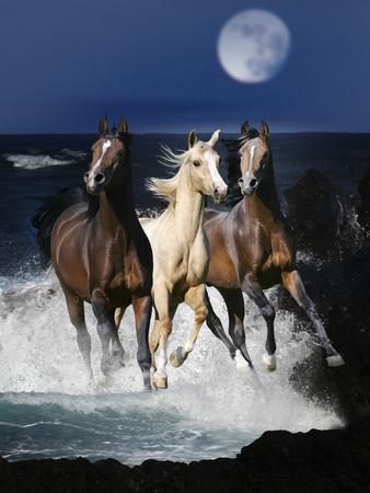 Dream Horses 080