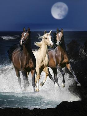 Dream Horses 080 by Bob Langrish