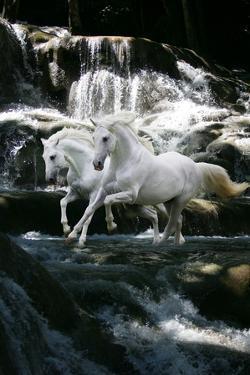 Dream Horses 082 by Bob Langrish