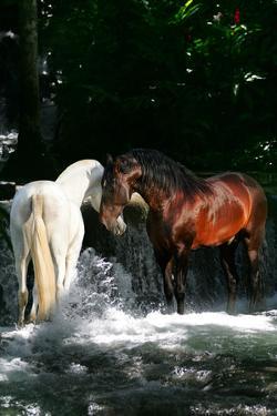 Dream Horses 085 by Bob Langrish
