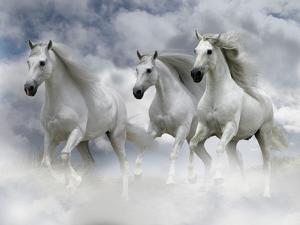 Dream Horses 087 by Bob Langrish