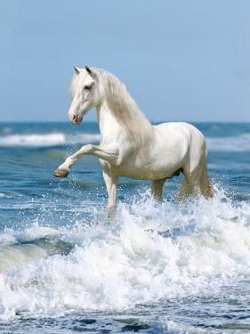 Dream Horses 097 by Bob Langrish