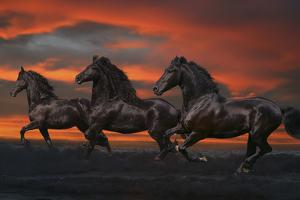 Fantasy Horses 37 by Bob Langrish