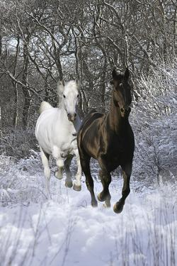 Fantasy Horses 42 by Bob Langrish