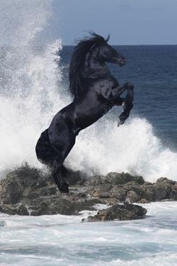 Horses by Bob Langrish