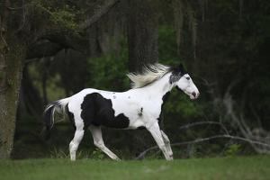 Ploomwood Arabians 027 by Bob Langrish