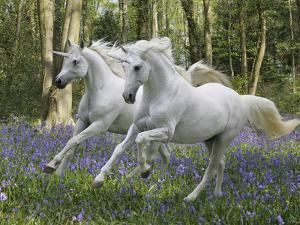 Unicorn 59 by Bob Langrish