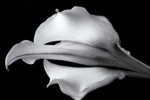 Elegant White BW by Bob Rouse