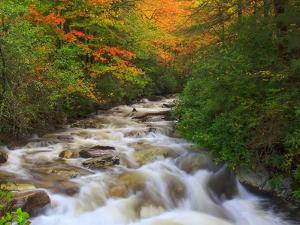Fall Rapids 3 by Bob Rouse