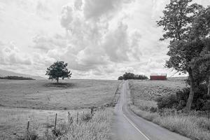 Hilly Road BW by Bob Rouse