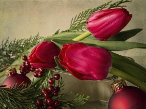 Holiday Red by Bob Rouse
