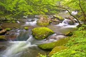 Little River Rapids by Bob Rouse