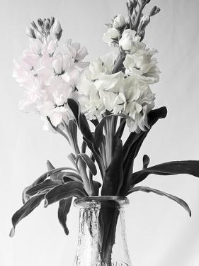 Pink and White Stock2 BW by Bob Rouse