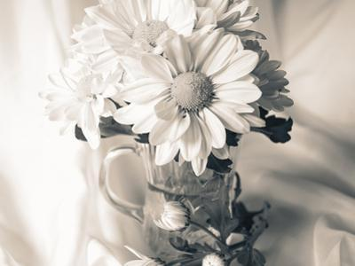 Summer Mums BW by Bob Rouse