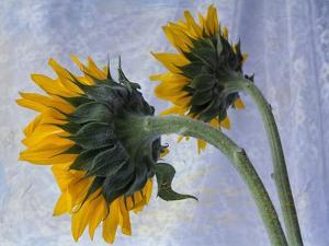 Two Sunflowers by Bob Rouse