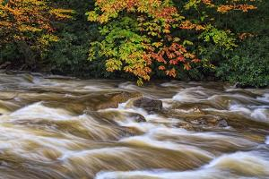 West Prong Rapids 3 by Bob Rouse