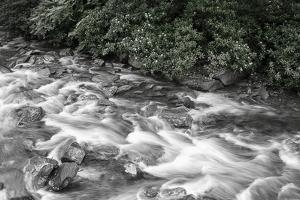 West Prong River 2 BW by Bob Rouse