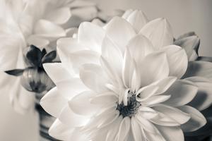 White Beauty BW by Bob Rouse