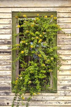 Window Flowers by Bob Rouse