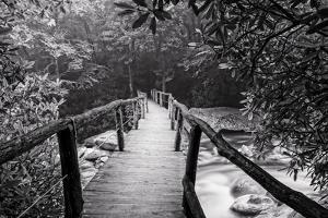 Wooden Bridge in Fog BW by Bob Rouse