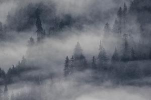 Low-Lying Clouds and Fog over an Evergreen Forest by Bob Smith