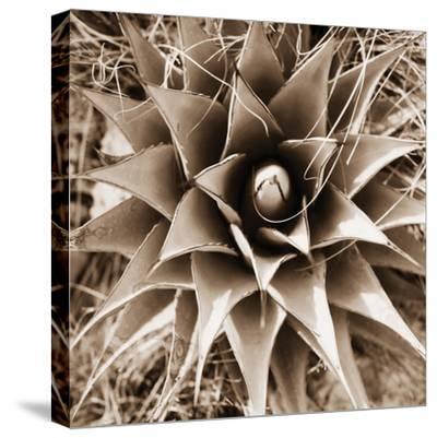 Desert Plants I by Bob Stefko