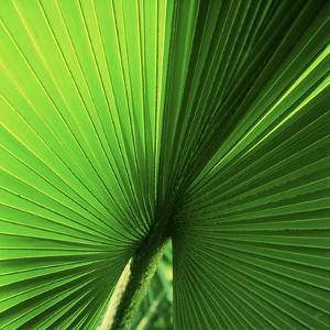 Palm Frond I by Bob Stefko
