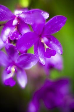 Purple Orchid II by Bob Stefko