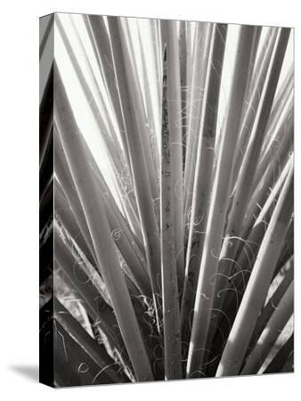 Torrey Yucca by Bob Stefko