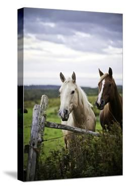 Two Horses Standing near Fence by Bob Stefko