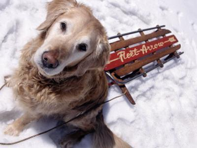 Dog and Old Sled, Breckenridge, CO