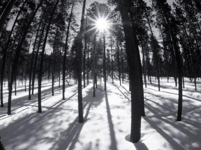 Trees and Shadows, Summit County, CO