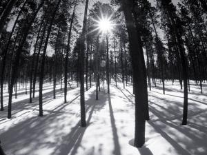 Trees and Shadows, Summit County, CO by Bob Winsett