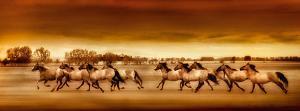 Argentine Horses by Bobbie Goodrich