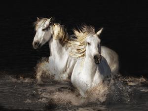 Camargue Horses by Bobbie Goodrich
